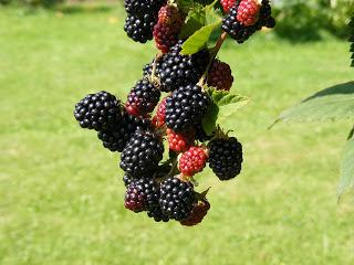 Fruta não é obrigatória! Quebra o mito ao Meu Estilo Paleo